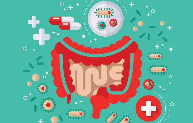 Another Study Shows Probiotics Are Great For Kidney Health!