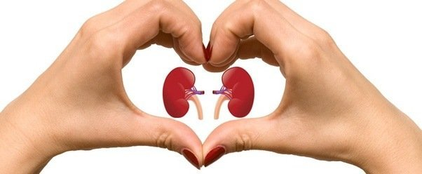 If You're Going In For Heart Surgery, Here's Why You Need To Protect Your Kidneys