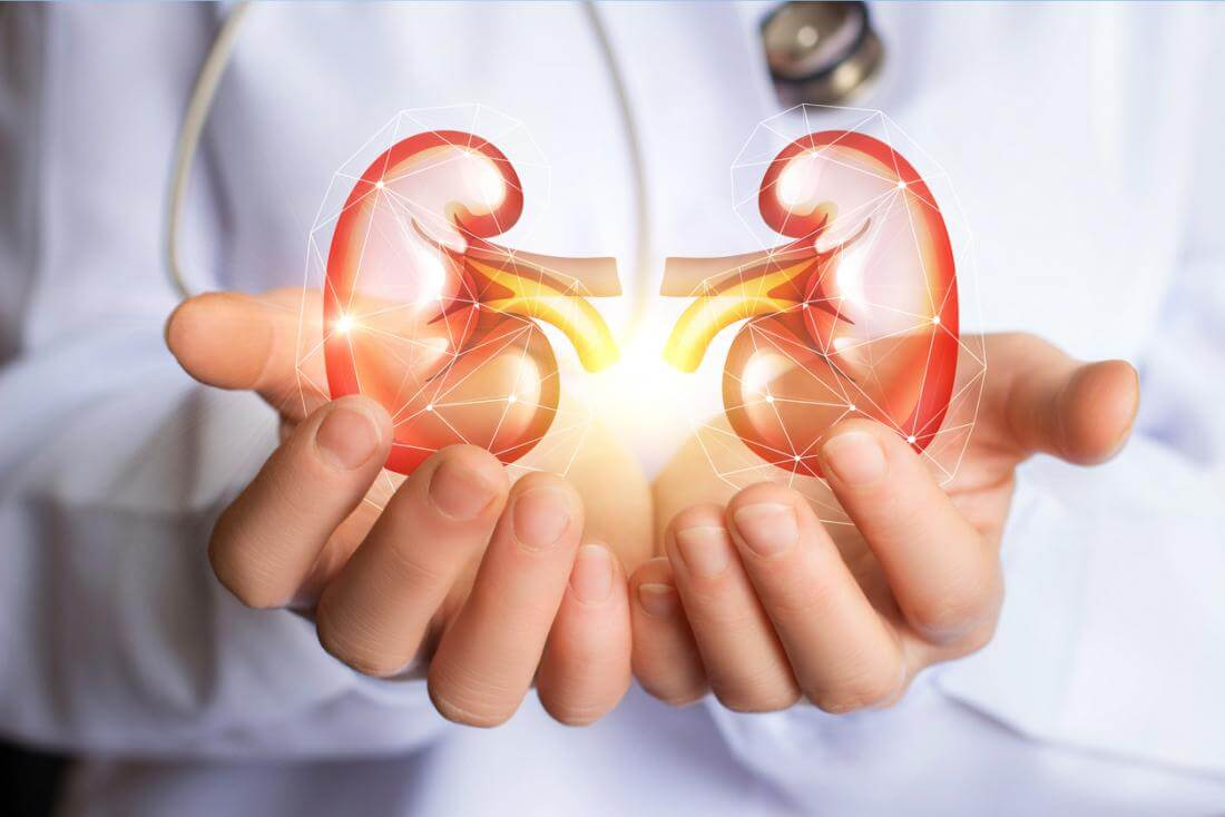 9 Facts About Kidneys You May Not Have Been Aware Of