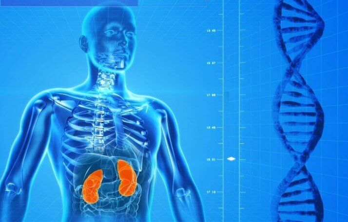 Genetics Could Play Key Role In Likelihood Of Developing CKD