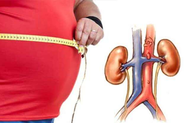 As Obesity Increases, Kidney Function Declines According To The Latest Study