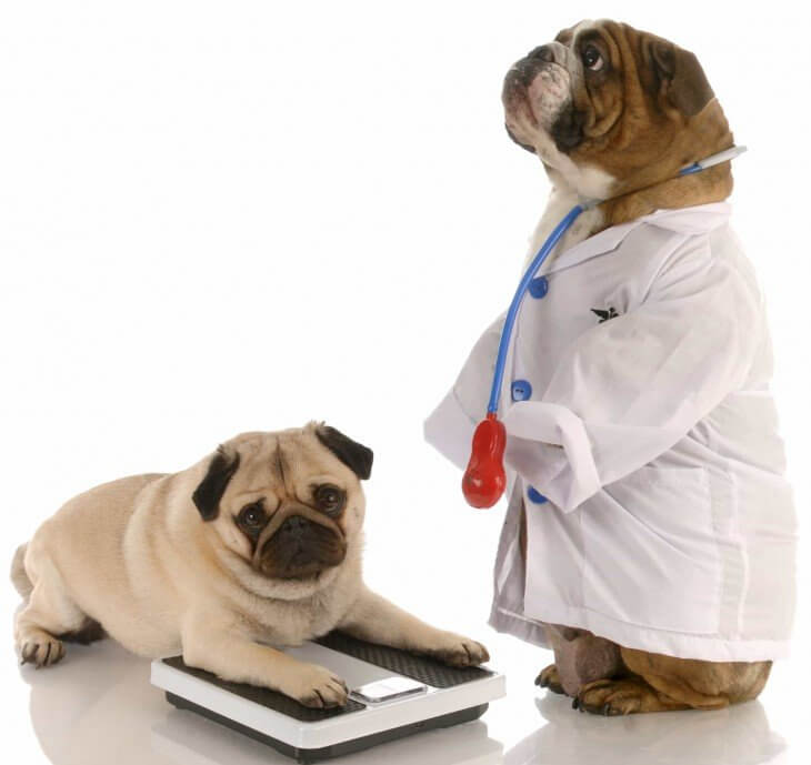 Vets Report That Half The Dogs They See Are Overweight, Most Owners Are In Denial