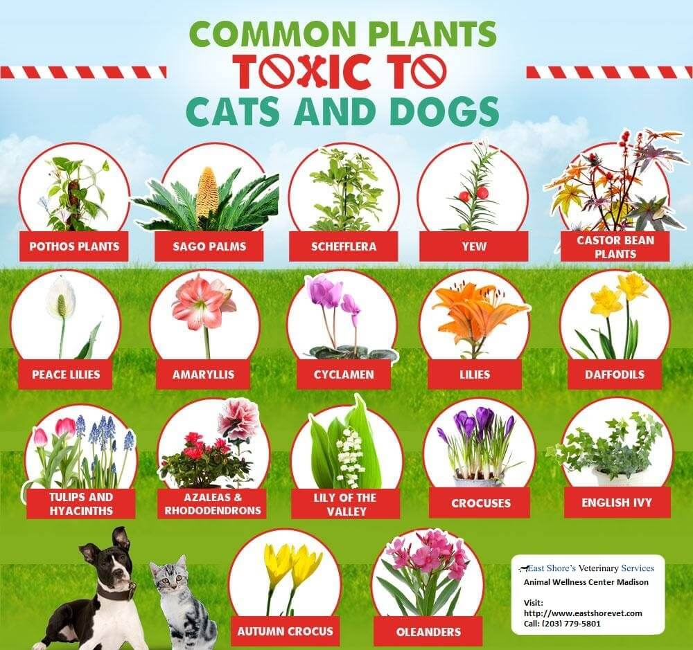 These Are The Plants You Need To Keep Your Pets Away From To Keep Their Kidneys Safe