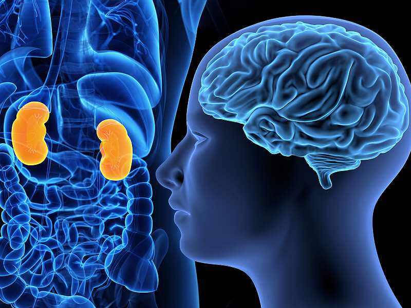Is Kidney Disease Upsetting Your Brain Function? Science Says, Probably…