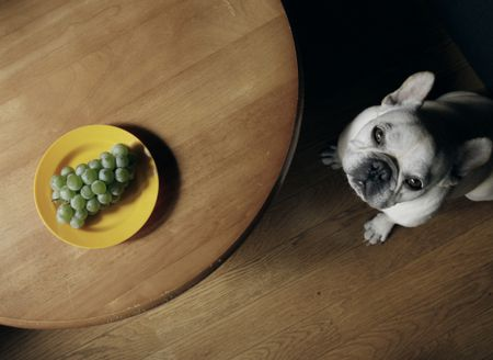 The One Fruit Guaranteed To Damage Your Dog's Kidneys