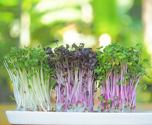 What Can Microgreens Do To Help Manage Potassium In CKD?