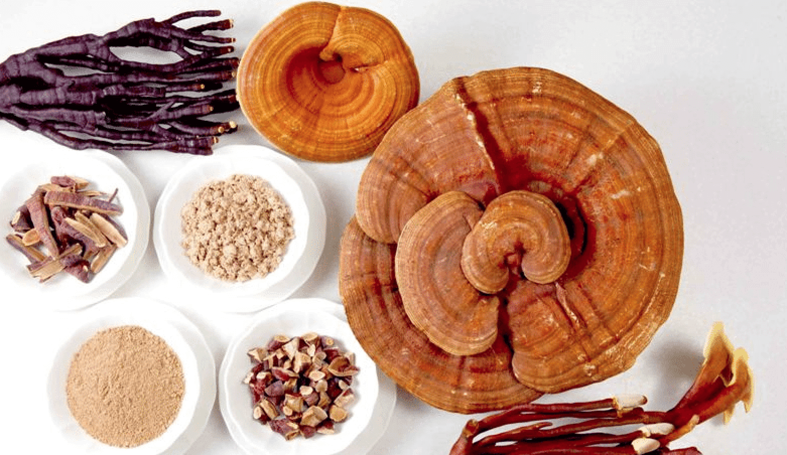 Medicinal Reishi Mushrooms Benefit Multiple Kidney Diseases