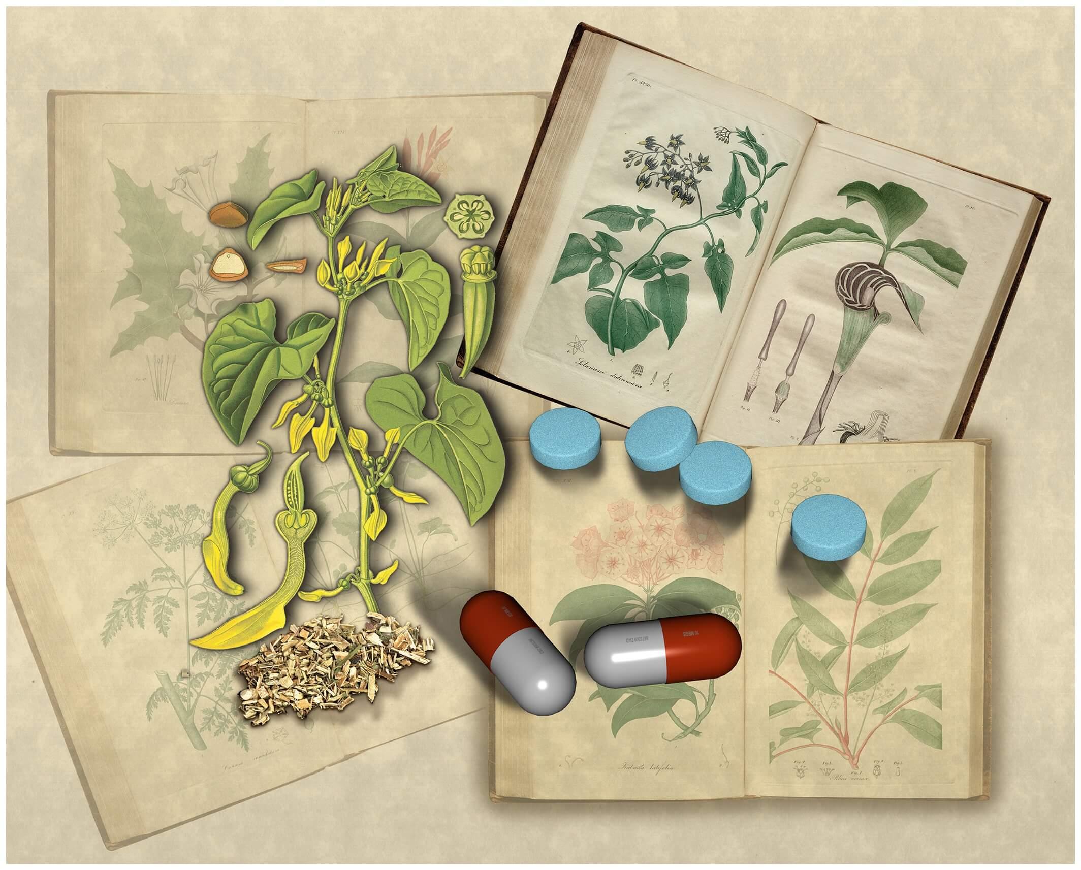 Gardeners Beware! European Plant Could Poison Your Kidneys