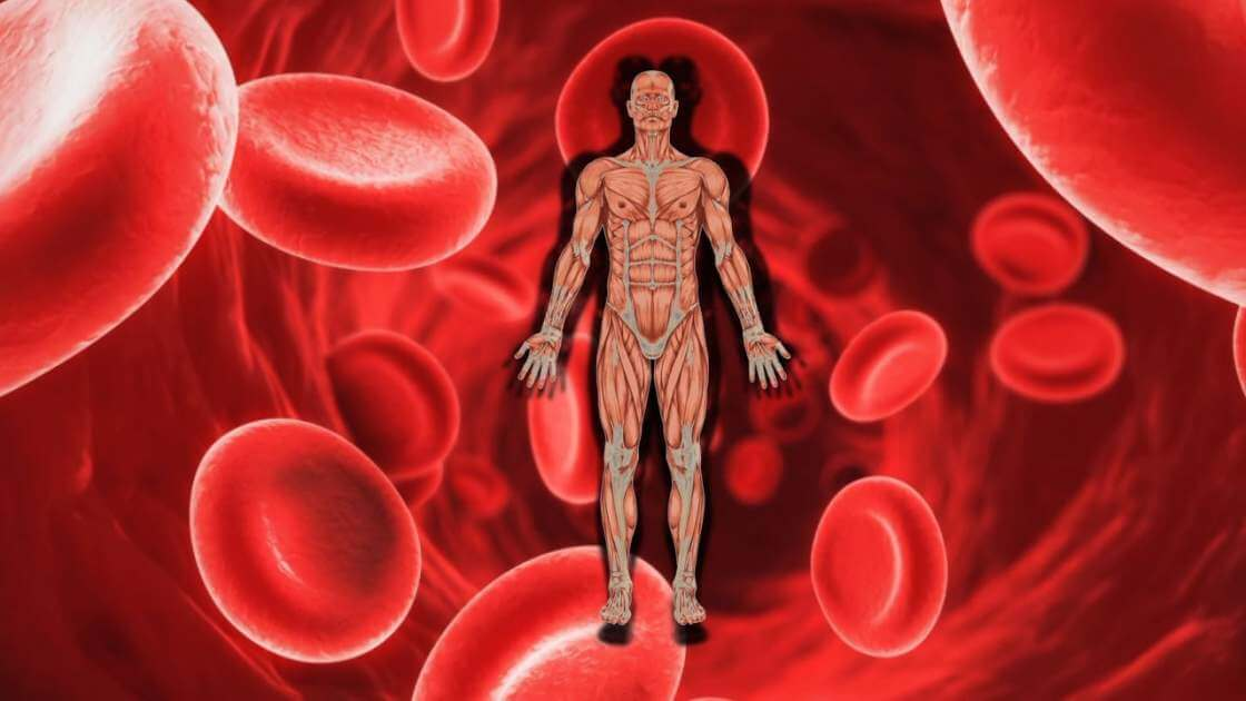 Anemics Beware! Kidney Complications May Be Lurking In Wait…