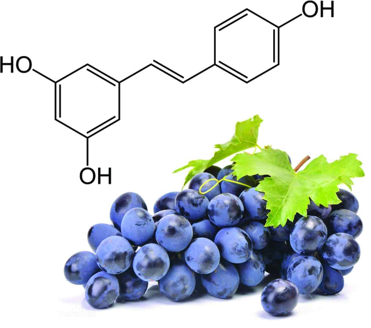 Resveratrol Could Be The Answer To Heart Problems in Kidney Sufferers